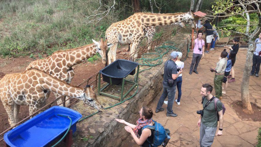 【ケニア】キリンと自撮りができるケニアのジラフセンター